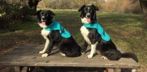 Cantabria pone en marcha un proyecto pionero para detectar el cáncer a través de los perros